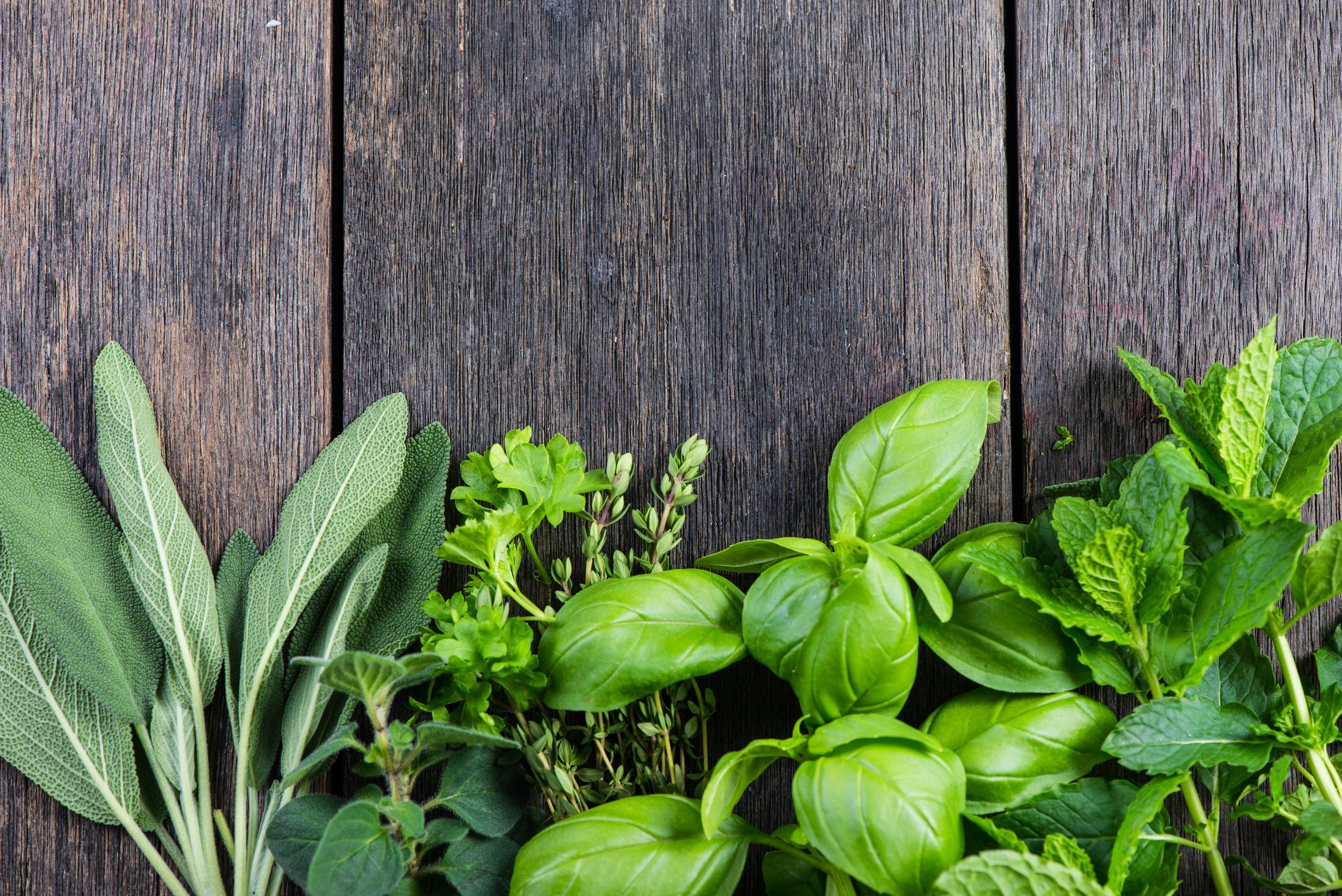 Herbs and Foraged Plants