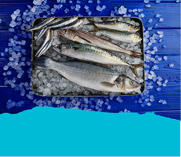 Fresh Cornish Fish