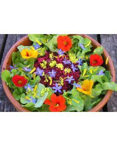 Organic Mixed Salad Leaf Pack 100g (UK)