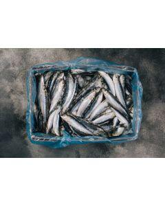 Cornish Sardines - 8 Fillets