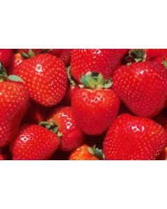 Cornish Strawberries