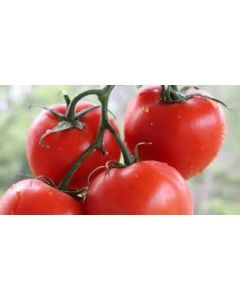 Tomatoes - Red Vine 1kg